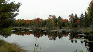 Beautiful Autumn colours captured at a swamp near Haliburton, Ontario.