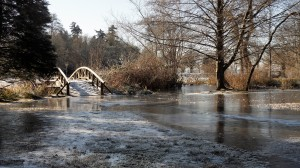 A winter shot of the wooden bridge near Lost Lagoon (Vancouver, B.C.). There is a lot of beaver activity in the area resulting in flooding!